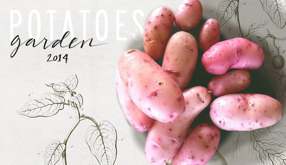 potatoeshero
