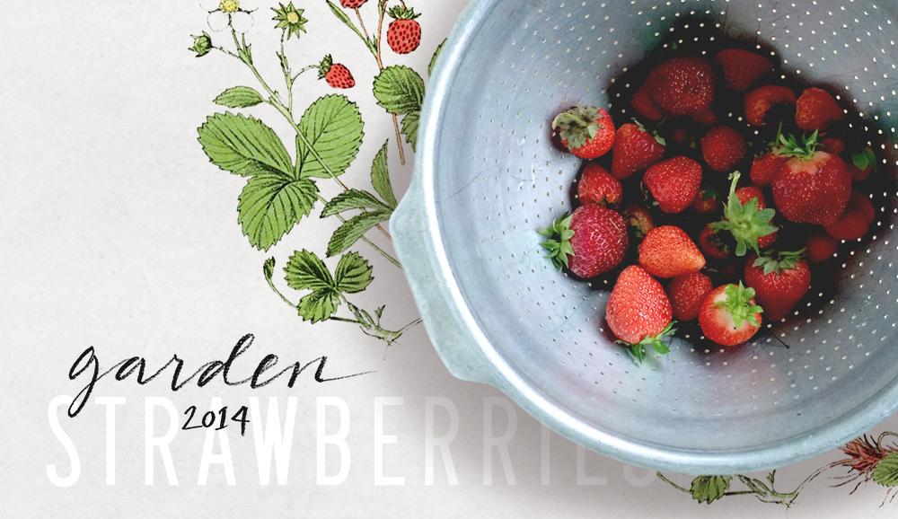 crystalmadrilejos_strawberries2014